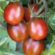 photo_plant_tomates